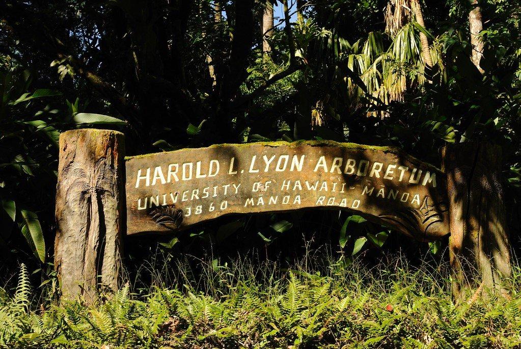 Lyon Arboretum